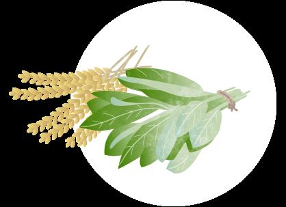 Illustration von Getreide und Kräutern