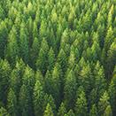 Nachhaltigkeit im Unternehmen