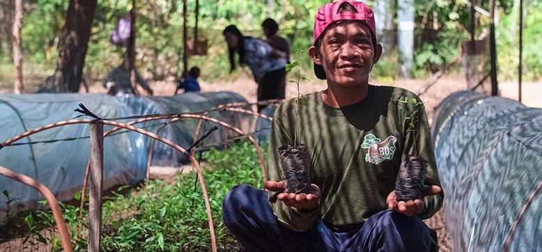Aufforstung des abgeholzten Regenwalds