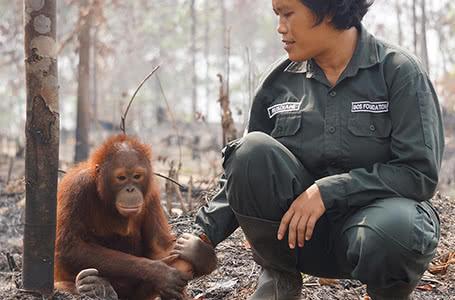 Engagement für den Regenwald auf Borneo