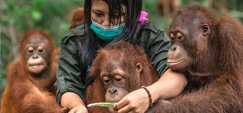 Zukunft schaffen für die Orang-Utans
